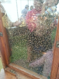 Bees behind glass
